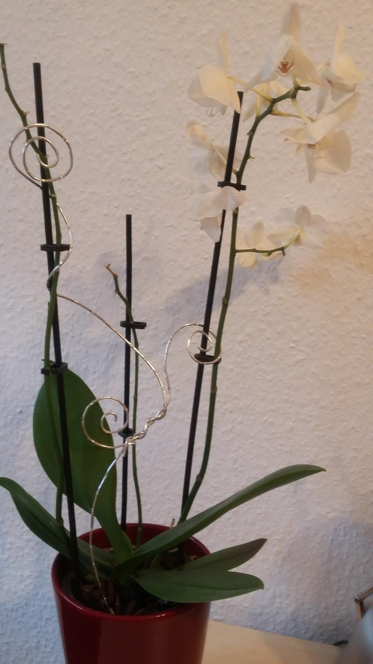 Inspiration Orchideen Dekoration Aus Aludraht Nikakreativ