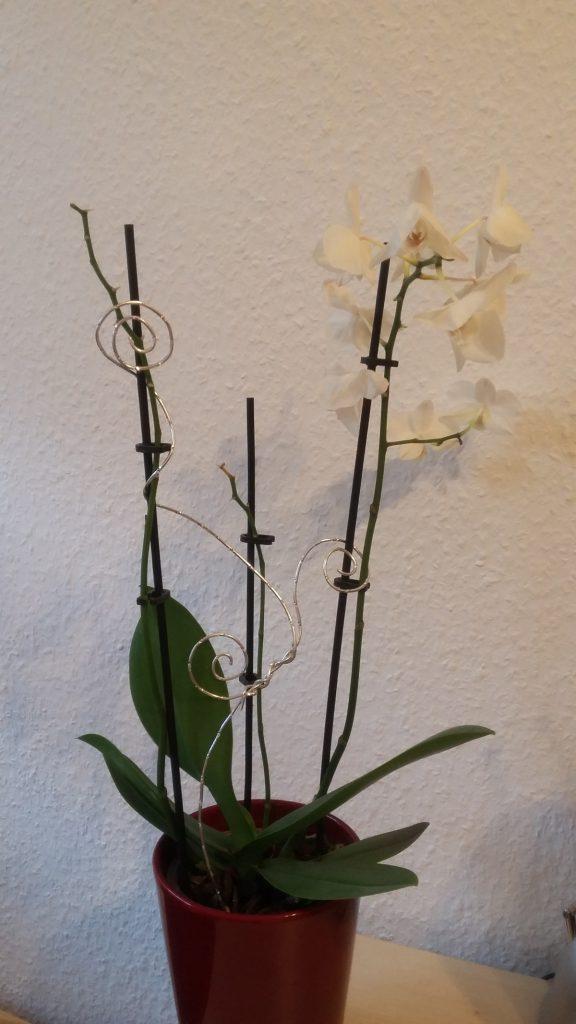 Orchidee weiß 3