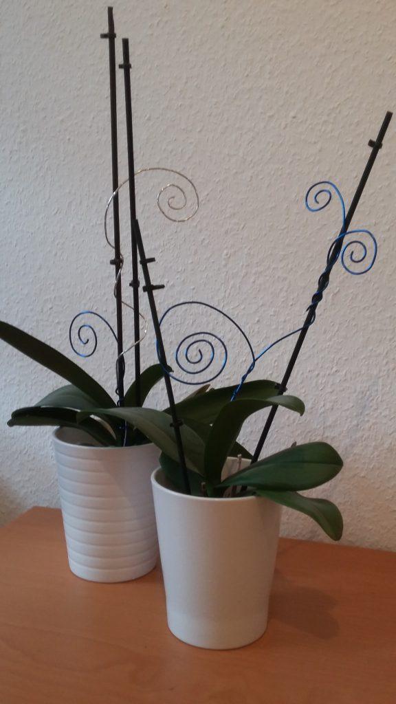 Orchideen blau