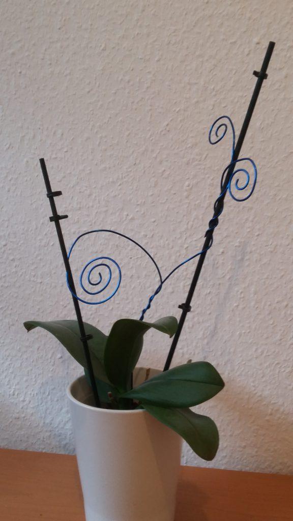 Orchidee blau 2